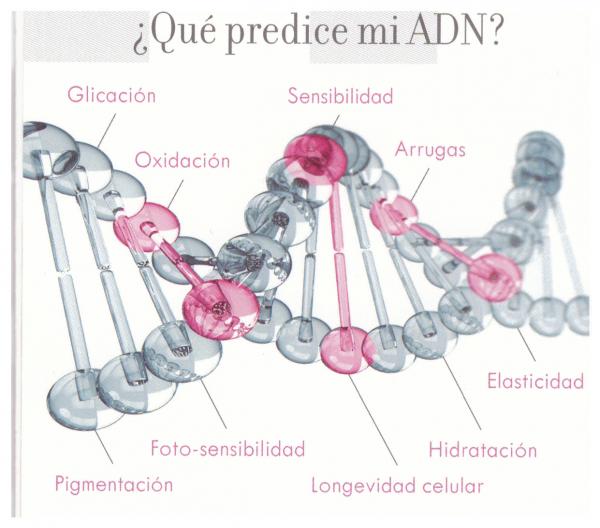 IMAGINA QUE PUDIERAS OBTENER EL DIAGNOSTICO DE TU PIEL BASADO EN TU ADN en TodoEstetica.com