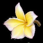 Logo CLINICA ESTETICA ANYLOPEZ
